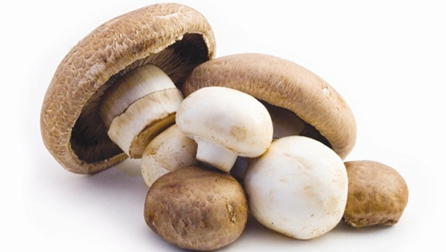 How Mushroom Helps You Lose Weight 2, mushroom, mushroom for weight lose