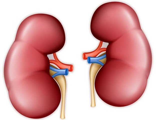 Complications of Kidney Disease 1, Kidney Disease