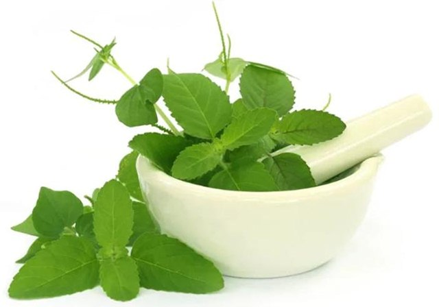 Top 4 Tulsi Face Pack for Summer, Tulsi Face Pack
